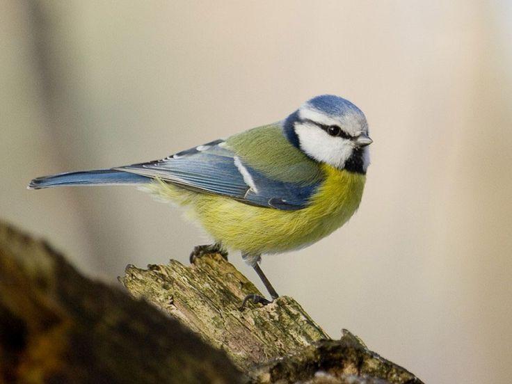 La France abrite des oiseaux extraordinaires… Découvrez 34 espèces d'une beauté…