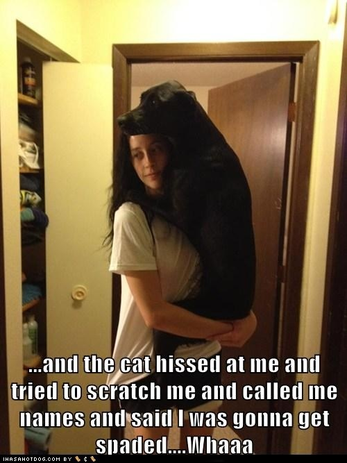 scared: Cat, Animals, Dogs, Pet, Funny Stuff, Funnies, Funny Animal, Friend