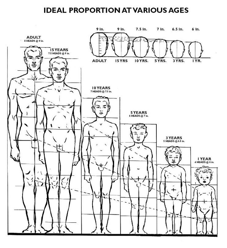 Adult = 8 heads tall, with a head size of 9 inches   Children:   15 year old = 7 1/2 heads tall with a head size of 9      inches ...