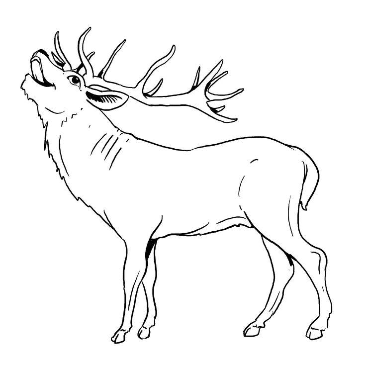 elch malvorlage gratis coloring art photography