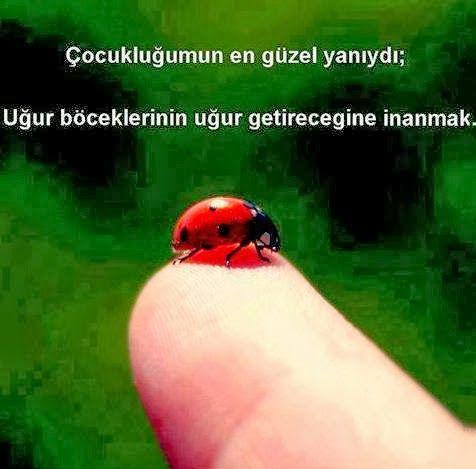 OĞUZ TOPOĞLU : çocukluğumun en güzel yanıydı uğur böceklerinin uğ...