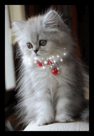 Christmas Kitten!