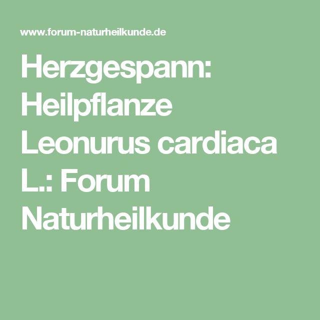Herzgespann: Heilpflanze Leonurus cardiaca L.: Forum Naturheilkunde