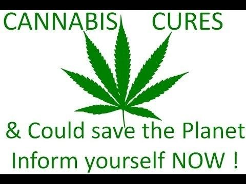 How to Use Whole Plant Cannabis Therapy To Cure One Thousand and One Ills