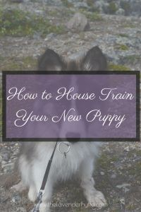 House Training Your New Puppy