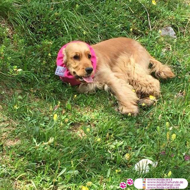 Orejeras impermeable para Perros en Rosa #ModaCanina #Cocker - Orejeras impermeable en Rosa para Cocker Spaniel y para todos los perros con orejas largas y peludas: Cavalier King, Caniche,...