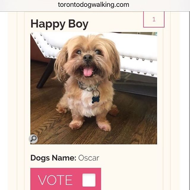 "Hello Instagram Friends!! I have entered a contest to be ""Toronto's Top Dog"" and it would mean so much to me if YOU could make it happen. PLEASE go over to the LINK in my instagram bio and VOTE for me everyday!!! #THANKYOU #dogsofinstagram #puppy"