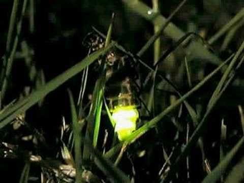 Una lucciola d'agosto - Gianmaria Testa - YouTube