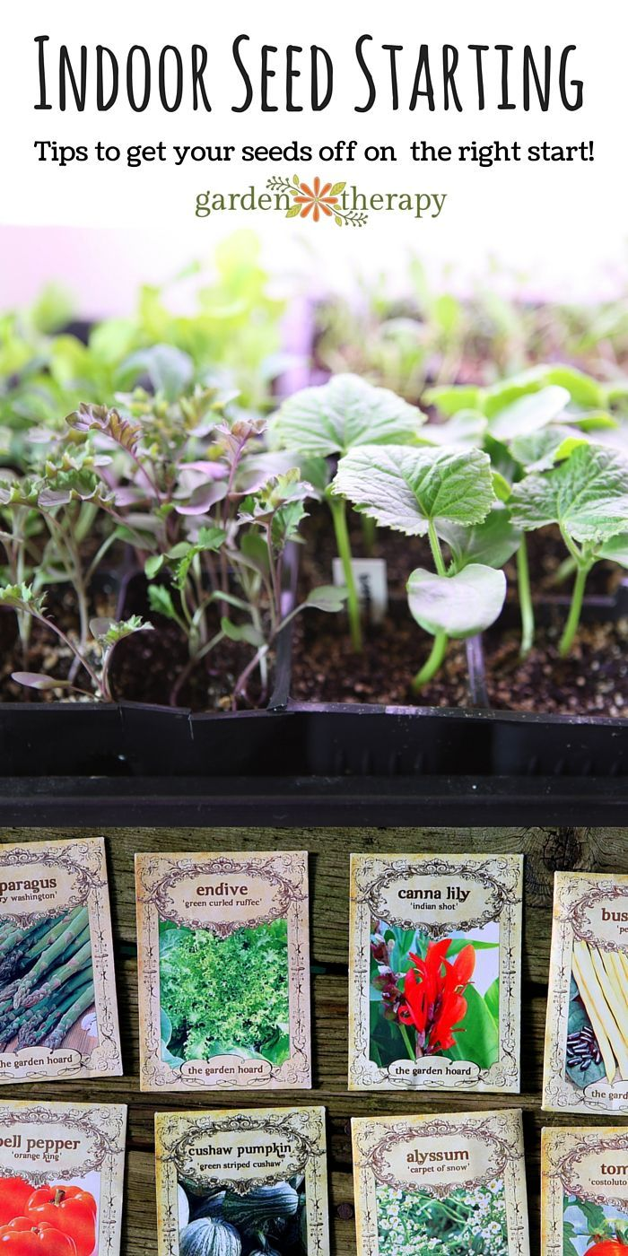 Kitchen Garden Project 17 Best Ideas About Planting Seeds On Pinterest Seed Starter