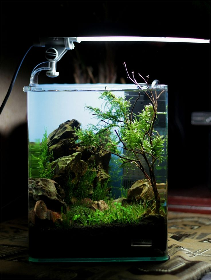 17 best images about cube aquascape ideas on pinterest for Best fish for nano tank