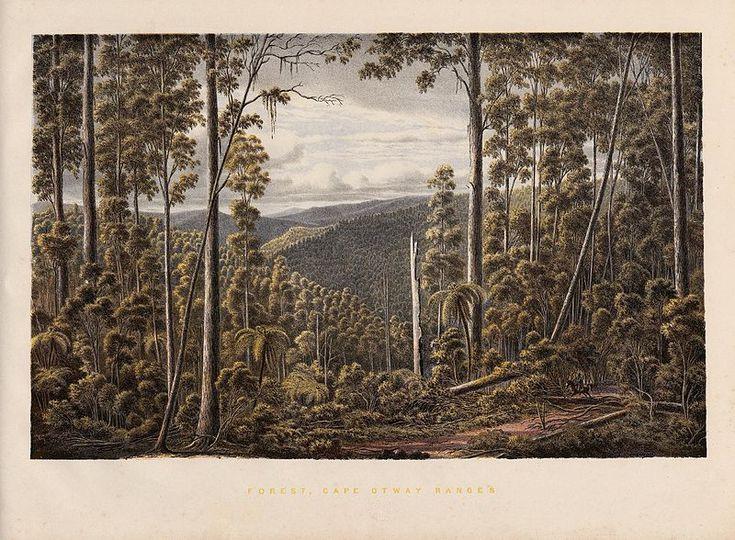 Forest Cape Otway Ranges. Eugene Von Guerard's Australian landscapes. 1867