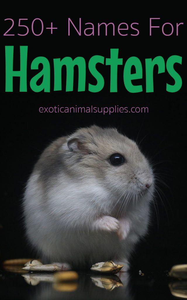 250 Hamster Names For Male Female Hamsters Hamster Names Cute Pet Names Female Hamster Names