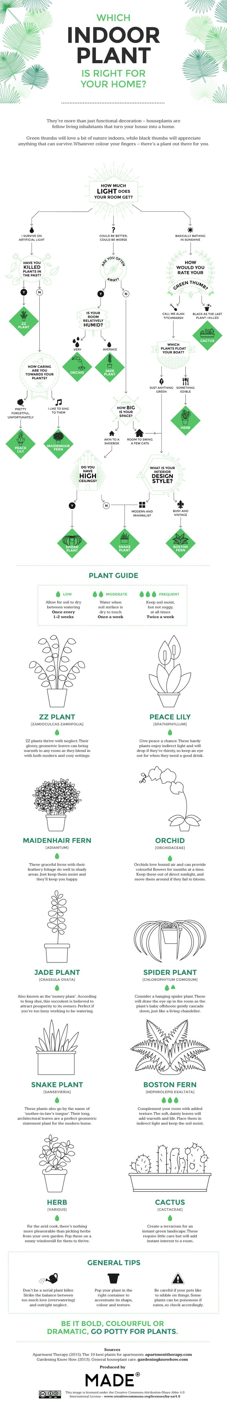 25 best peace lily ideas on pinterest best indoor plants which types of houseplants are best for your home flowchart peace lilyorchid flowersorchidsplant dhlflorist Gallery