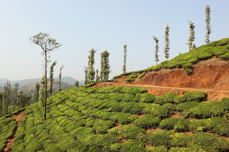 #Wayanad another beautiful destination in South India for travellers. Now an OYO city. #oyorooms