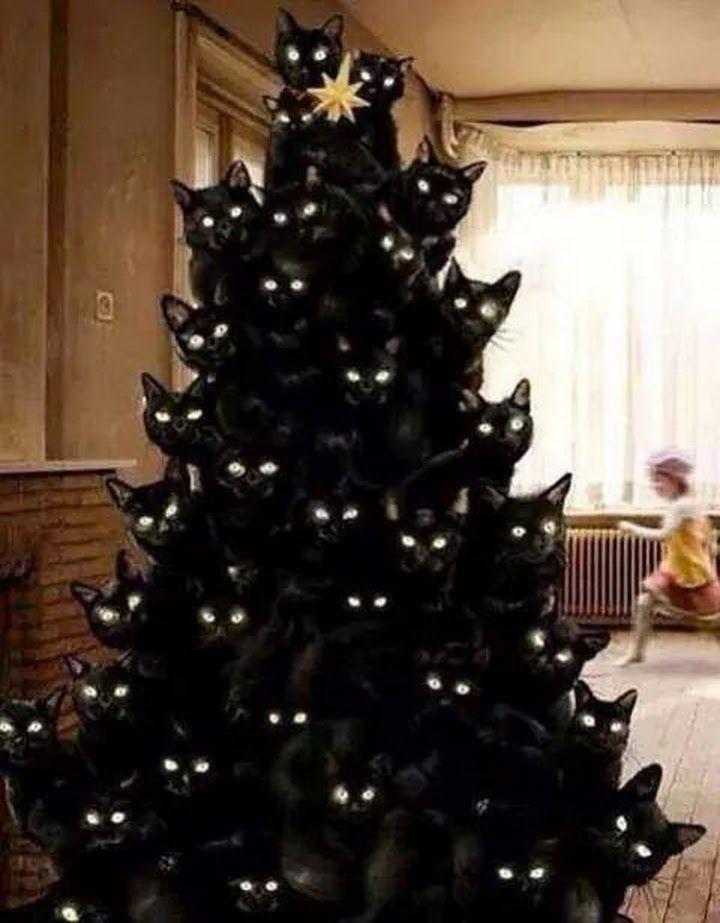Weihnachtsbaum für Katzenliebhaber!