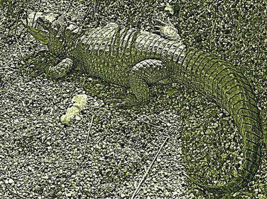 Camouflaged croc