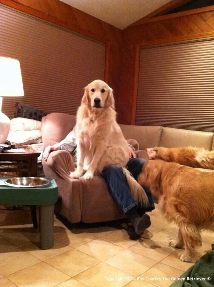 Wook it! Jack O took my spot on gwampy lap on the wecliner via ray charles fb