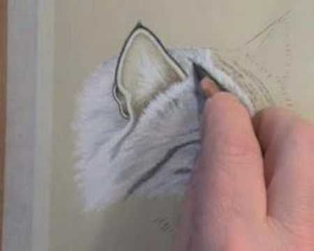 How to draw cat fur