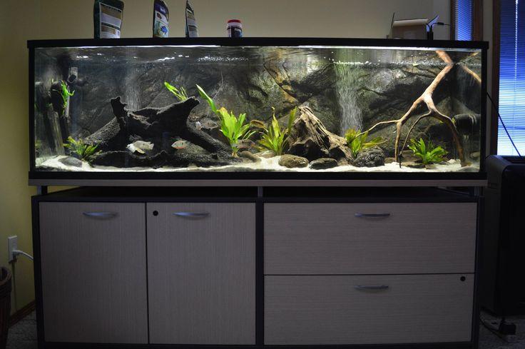 ber ideen zu aquarium einrichten auf pinterest aquascaping chinoiserie und aquascape. Black Bedroom Furniture Sets. Home Design Ideas