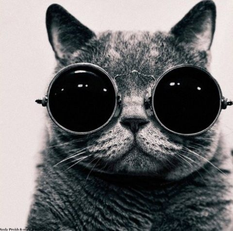 catHipster, Kitty Cat, Pets, Mad Scientists, Big Eye, Sunglasses, Steampunk, John Lennon, Animal