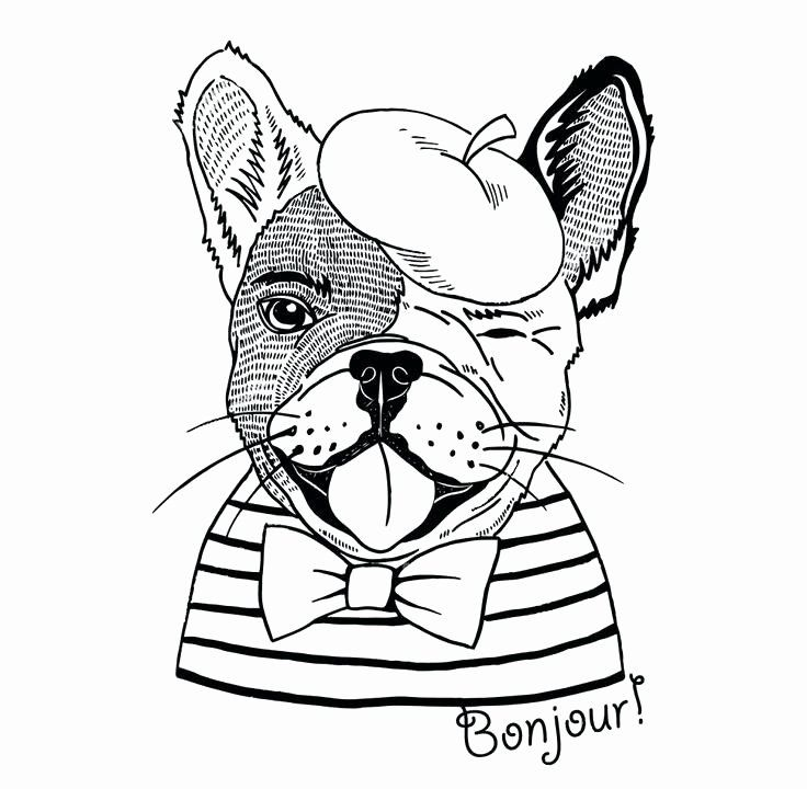Bull Dog Coloring Page Lovely French Bulldog Line Drawing At Getdrawings Puppy Coloring Pages Dog Coloring Page Coloring Books