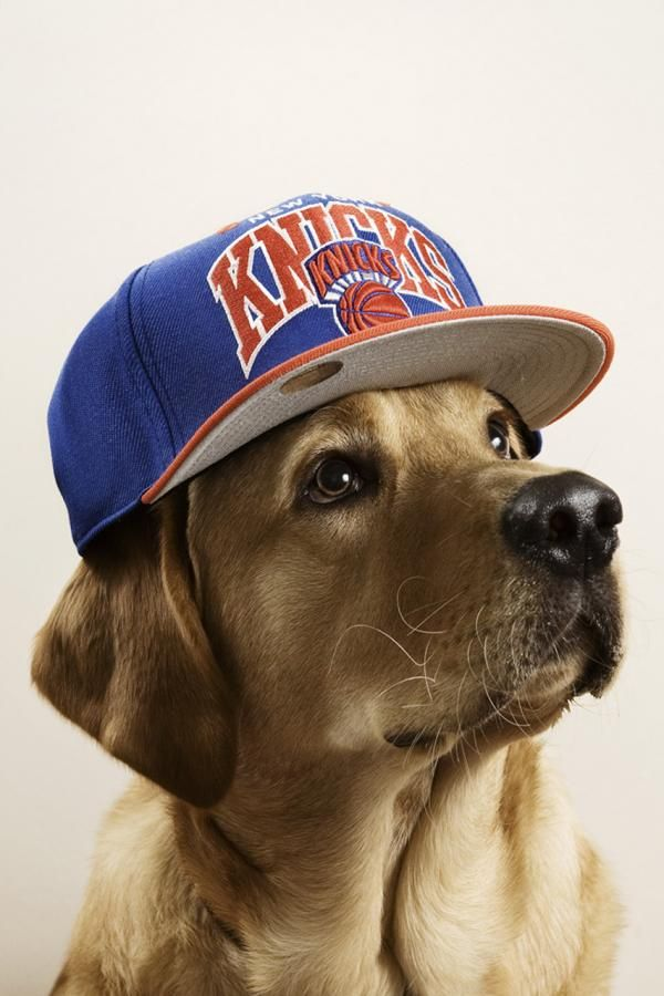 Dogs with caps. *** ✰