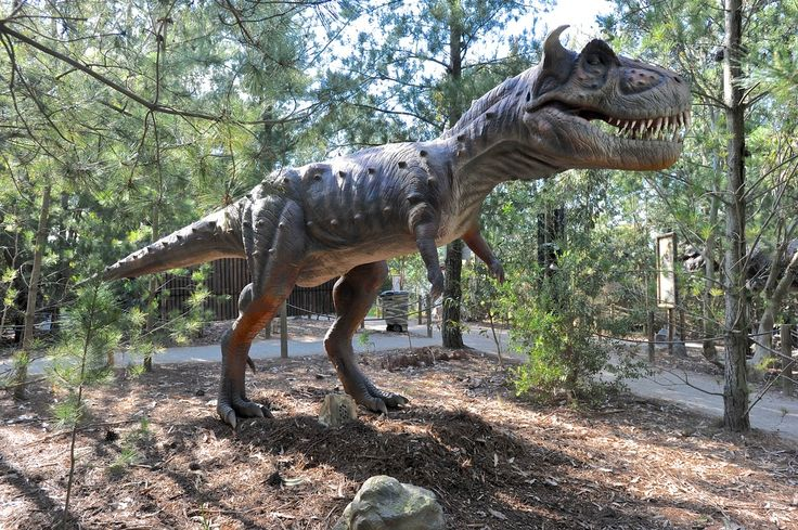 The Dinosaurs have arrived at Somerville Christmas Tree Farm! Experience the dinosaurs up close and personal.