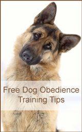 Free Dog Obedience Training Tips http://www.bestdogobedienceideas.com/