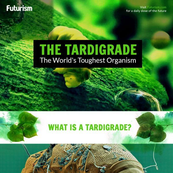 Tardigrades can withstand gamma radiation, oxygen deprivation, andthe intense blast of solar wind. They can also go without food or water for ten years.