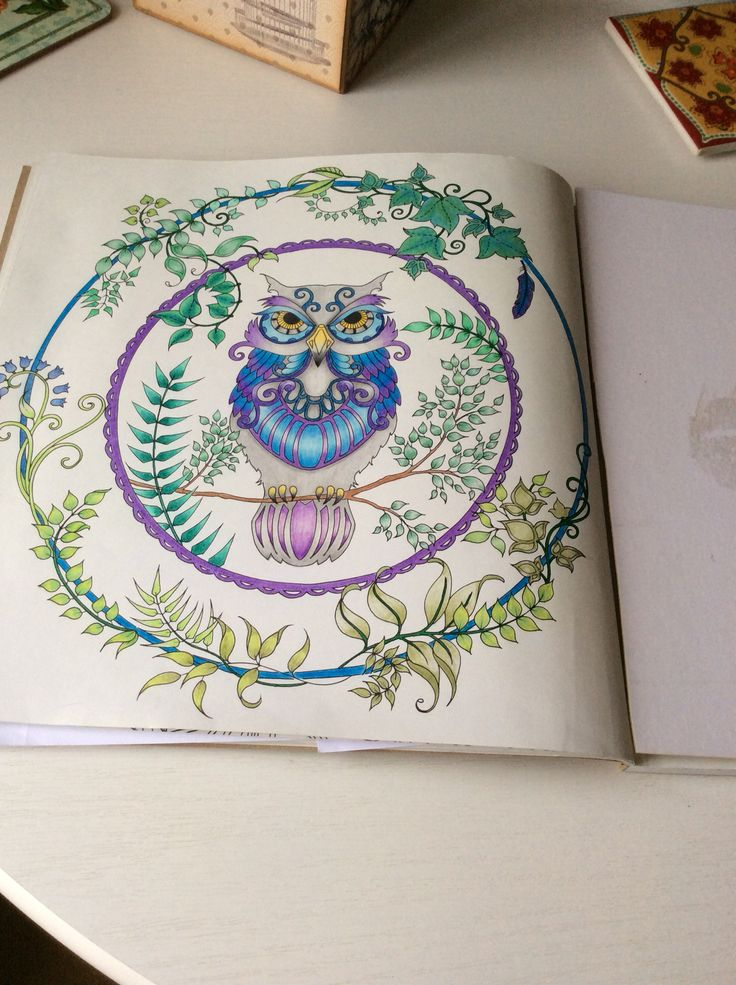 Owl Picture From Enchanted Forest Colouring Book Coloured With Pencils