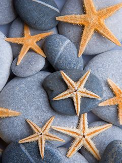 Download free Starfish On Stones Mobile Wallpaper contributed by alvarez, Starfish On Stones Mobile Wallpaper is uploaded in Nature Wallpapers category.