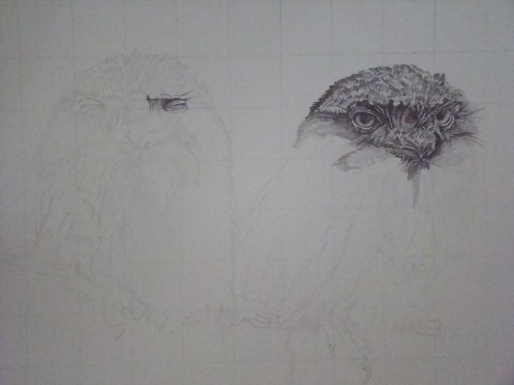 Good morning everyone, Here is the start of a new graphite illustration. As you can clearly see, I have started by using a basic grid, completed a simple sketch, and added some detail. I hope you enjoy watching this grow.. To see more of my work please visit  http://www.davidtruman.co.uk/Wildl