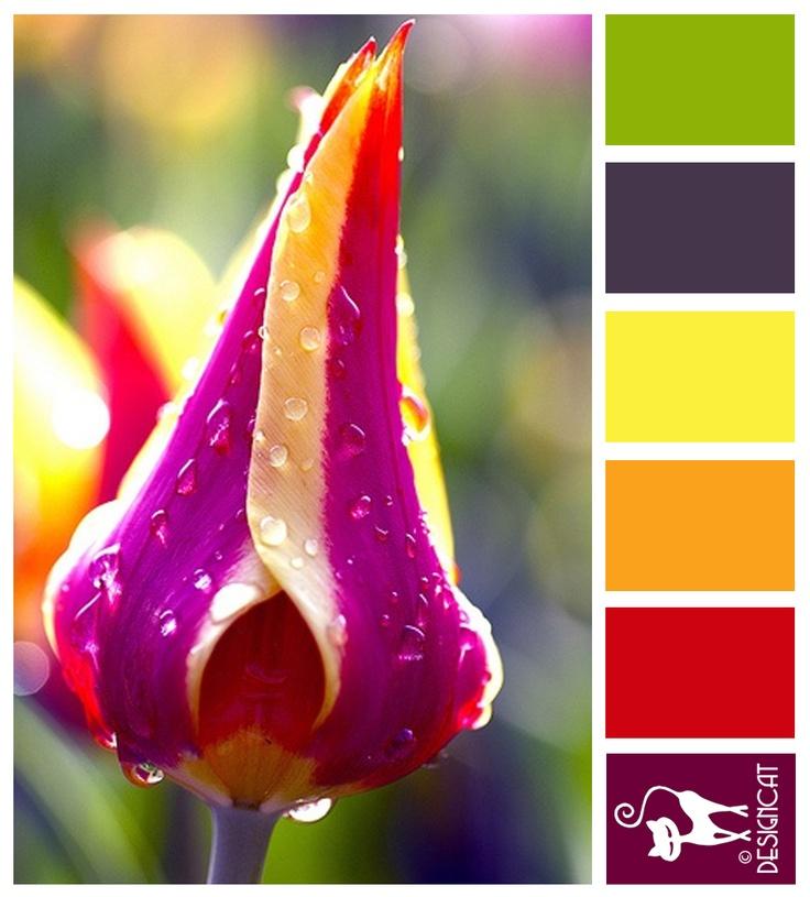 1000 Images About Colour Palettes On Pinterest Paint