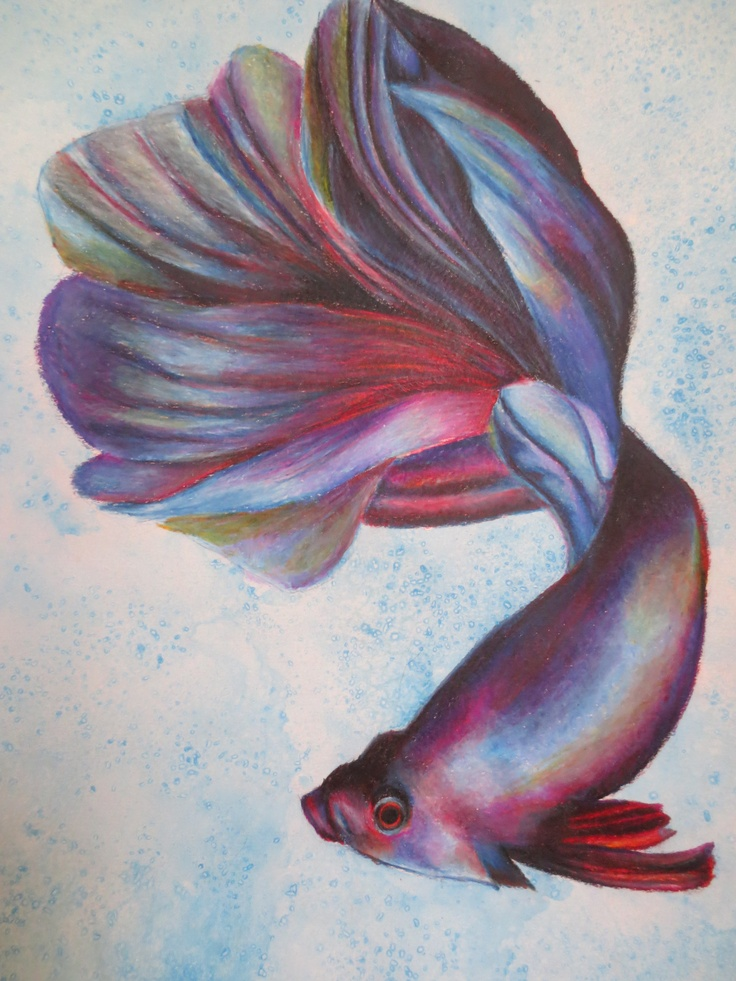 76 best images about beta fish tattoo on pinterest koi for Betta fish painting