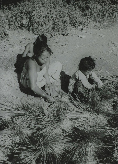 Indonesia - Harvesting rice (1947) by Nationaal Archief, via Flickr