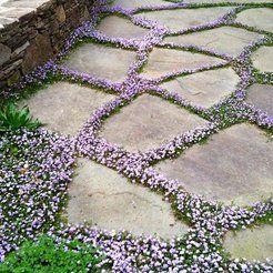 In 10 stappen een onderhoudsarme tuin