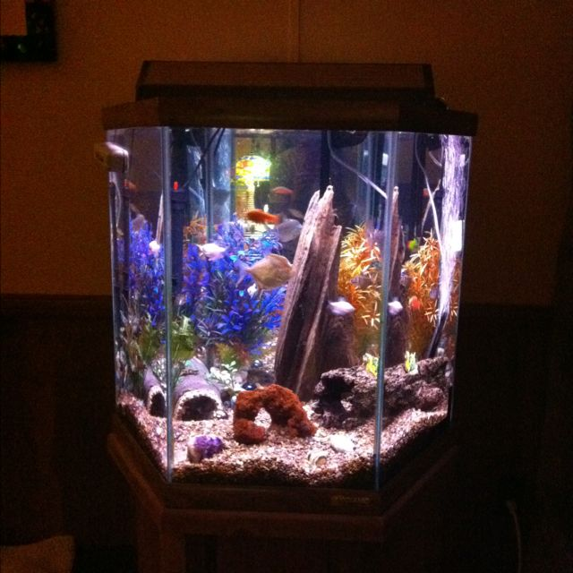 42-gallon mirrored-back hexagon fish tank. It's so old but still a great tank. This pic is from Dec. 2011 and I've had it since mid-1990's.