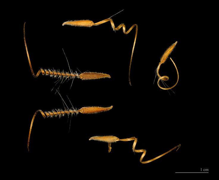 La graine de l'erodium cicutarium est dotée d'une intelligence remarquable : elle se propulse dans les airs, puis s'enfonce dans le sol comme une foreuse.