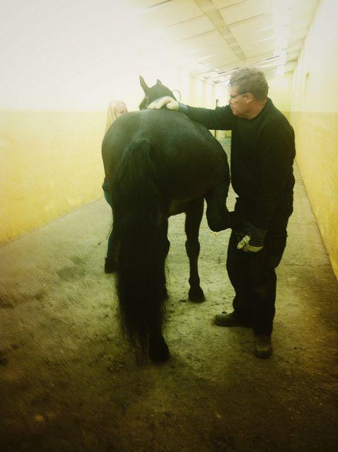 horse, hospital, veterinary