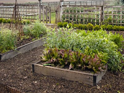 1000 images about veggie garden on pinterest gardens raised beds and raised garden beds - Country vegetable garden ideas ...