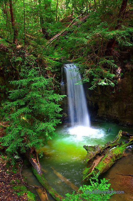 Sempervirens Waterfall - California's Big Basin State Park by Darvin Atkeson, via Flickr
