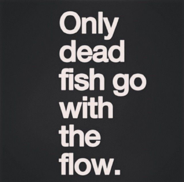 Fish Motivational Quotes: 25+ Best Fish Quotes On Pinterest