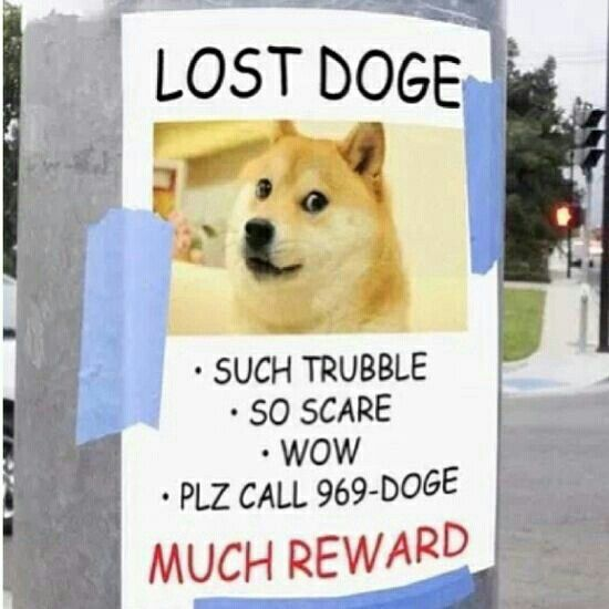 Funny Pictures About Lost Doge Oh And Cool Pics Also