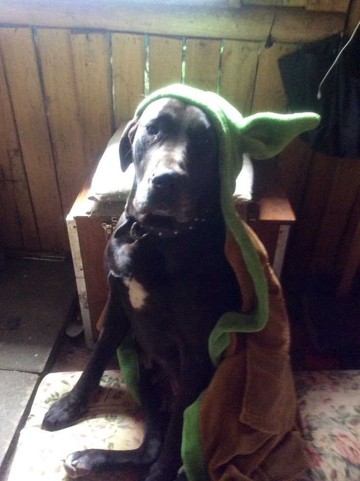 Bodie (boo) the mum in my little sis' yoda dressing gown, boo wears it a lot