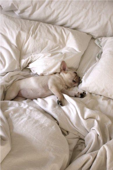 Bed munchkin.