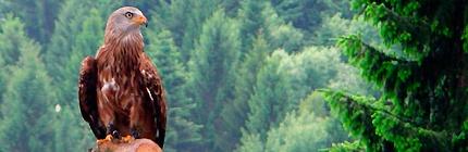 El turismo ornitológico, una apuesta por el desarrollo y la conservación   Educa tu mundo
