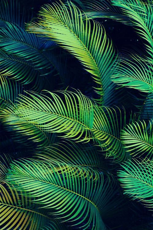 palm texture and color