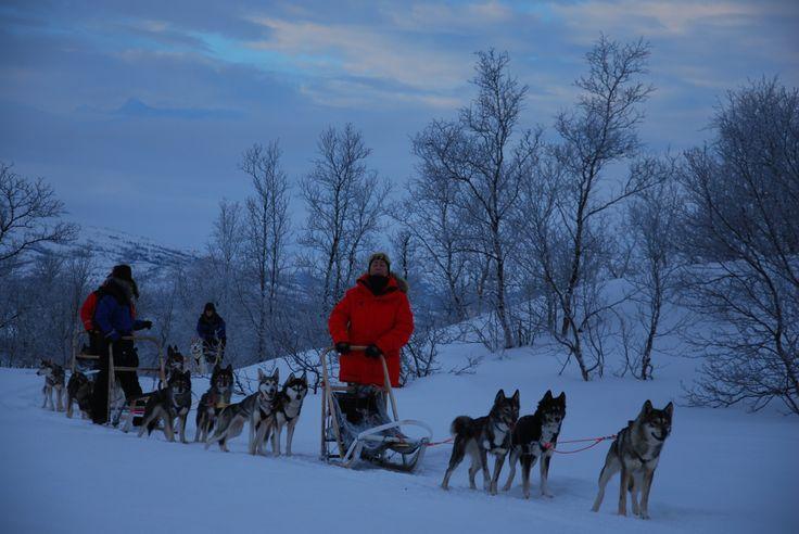 Escursione con i cani da slitta - Dogsledding  (Luca Franco, Abisko)