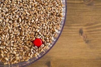 Blé dur: protéines et fibres