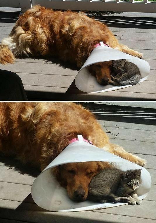 Hood Of Shame Cat And Dog Photos Dog Photos Dog Cat